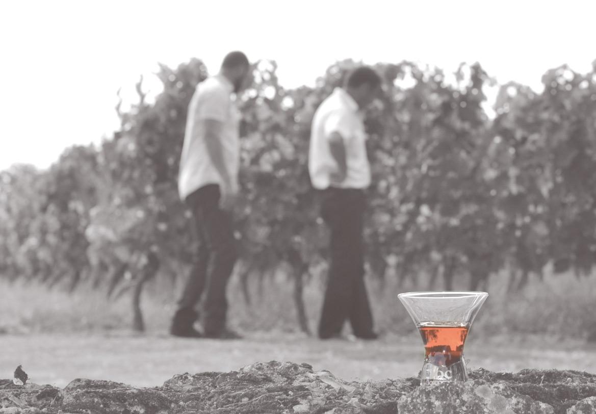 Vignoble Floc de Gascogne
